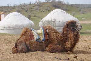 Отдых в Кизилкум пустыне - Юртовый лагерь Айдар
